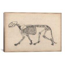 Animal Art 'Tiger Skeleton Anatomy Drawing' Graphic Art on Canvas