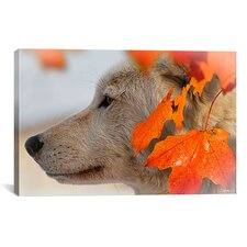 'Wolf Profile Autumn Leaves' by Gordon Semmens Photographic Print on Canvas