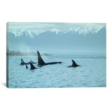 """Silent Passage - Orcas"" by Ron Parker Photographic Print on Wrapped Canvas"