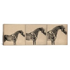 Animal Art 'The Anatomy of The Horse Collage' by George Stubbs Painting Print on Wrapped Canvas