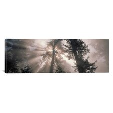 Panoramic Trees Redwood National Park, California Photographic Print on Canvas