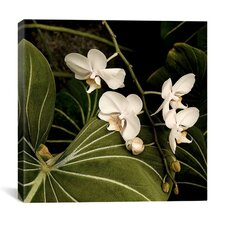 """""""White Orchid on Leaves - Flowers"""" Canvas Wall Art by Harold Silverman"""