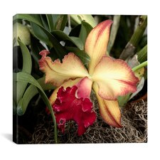 """""""Silky Red Orchid - Flowers"""" Canvas Wall Art by Harold Silverman"""