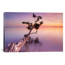 """""""Water Tree XI"""" by Moises Levy Photographic Print on Canvas"""