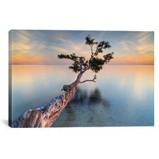 """""""Water Tree XIV"""" by Moises Levy Photographic Print on Wrapped Canvas"""