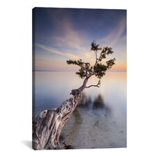 'Water Tree X' by Moises Levy Photographic Print on Canvas