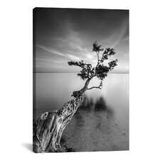 'Water Tree V' by Moises Levy Photographic Print on Canvas