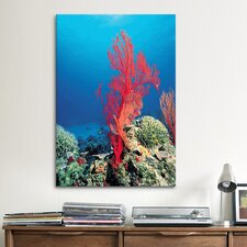 Marine and Ocean Red Coral Photographic Print on Canvas
