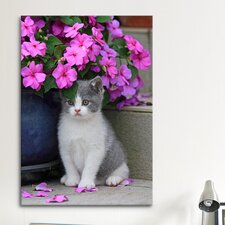 'Kitten and Flower' by Carl Rosen Photographic Print on Canvas