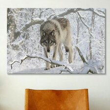 'Zoo Wolf 03' by Gordon Semmens Photographic Print on Canvas