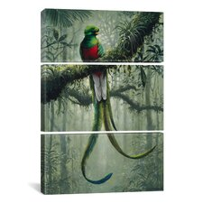 Harro Maass Resplendent Quetzal 3 Piece Graphic Art on Wrapped Canvas Set