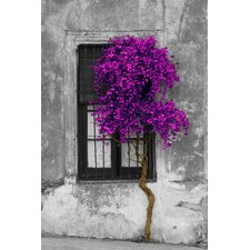 Panoramic 'Tree in Front of Window' Photographic Print on Wrapped Canvas