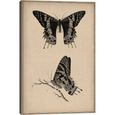 Animal Art Vintage Butterfly Scientific Drawing Graphic Art on Wrapped Canvas