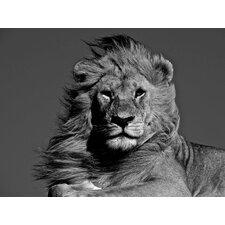 """Glasbild """"African Animals Magnificent Lion"""" von Charlie Hamilton James, Fotodruck"""