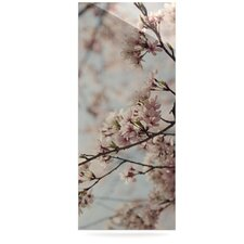 Japanese Cherry Blossom by Catherine McDonald Photographic Print Plaque