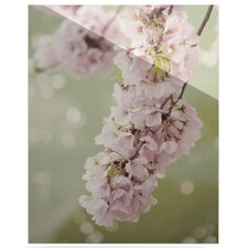 Blossom by Catherine McDonald Photographic Print Plaque