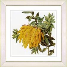 Vintage Botanical No. 44W by Zhee Singer Framed Giclee Print Fine Wall Art