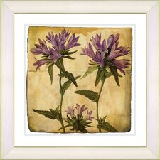 Vintage Botanical No. 16A  by Zhee Singer Framed Giclee Print Fine Wall Art