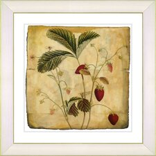 Vintage Botanical No. 06A  by Zhee Singer Framed Giclee Print Fine Wall Art