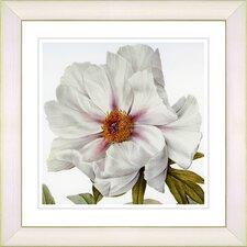 Vintage Botanical No. 52W by Zhee Singer Framed Giclee Print Fine Wall Art