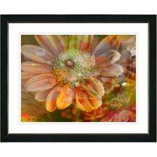 """Orange Glory Daisy Flower"" by Zhee Singer Framed Graphic Art"