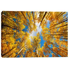 """""""Towering Aspens"""" by Darren White Photographic Print on Wrapped Canvas"""