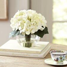 Creamy White Hydrangea in Water