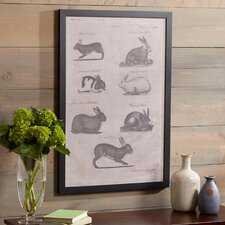 Rabbit Study Framed Print