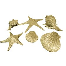 Attractive Sea Shell Wall Décor
