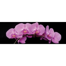 """""""Pink Orchids"""" Photographic Print"""
