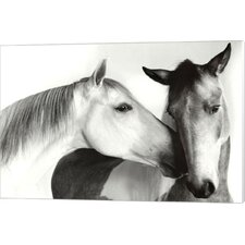 Nuzzle by Van Otteren Photographic Print on Wrapped Canvas