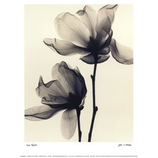 Saucer Magnolia by Judith Mcmillan Photographic Print