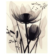 Lotus and Grasses by Judith Mcmillan Photographic Print
