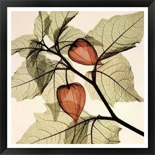 Japanese Lanterns (MED.) Steven N. Meyers Framed Painting Print