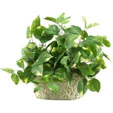 Pothos Desk Top Plant in Pot