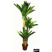 Artificial Dracaena Yukka Plant