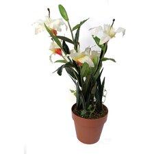 Artificial Lily Bonsai
