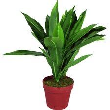 Artificial Drancaena Plant