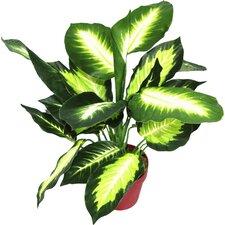Artificial Dieffenbachia Plant
