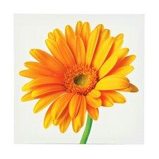 Wandbild Gelbe Gerbera - 60 x 60 cm