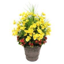 Daisy Garden Mix in Planter