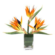 Bird of Paradise Desk Top Plant in Vase