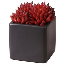 Succulent Desk Top Plant in Pot (Set of 2)