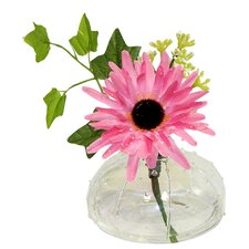 Daisy in Sea Urchin Glass Vase