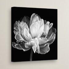 'Tulipa Double Black & White' Photographic Print on Canvas