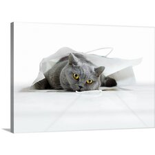 Cat in a Bag by Keren Segev Photographic Print on Canvas