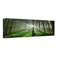 Leinwandbild Forest Floor, Fotodruck