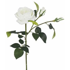 Touch Single Stem Cabbage Rose