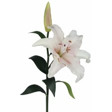 Magic Touch Casa Blanca Lily Real Feel Flower
