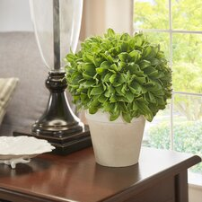 Kinsley Desk Top Plant in Pot